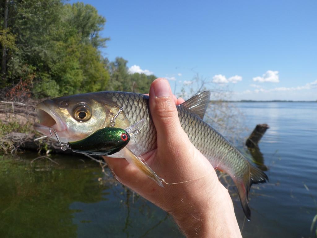 Рыбалка на саратовском водохранилище базы
